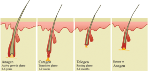Hair Loss Prevention - Causes
